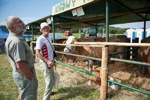Wystawa bydła mięsnego